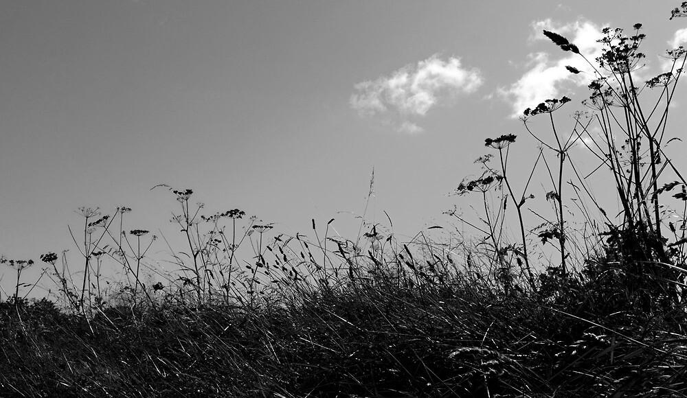 Grasses Ballycultra by ragman