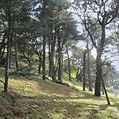 Woodland in Vigo by Angelaook
