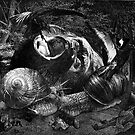 Loving the Snails. by Andy Nawroski
