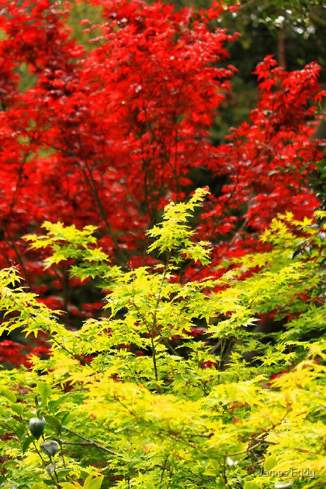 Red And Yellow Leaves by James Eddy