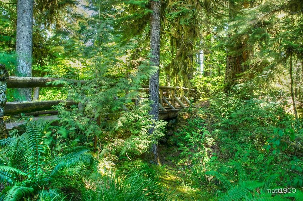 The Bridge in the Woods by matt1960
