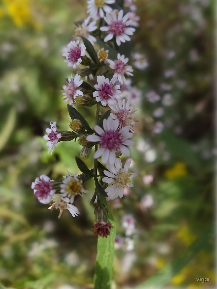 Cascade of wild flowers by vigor