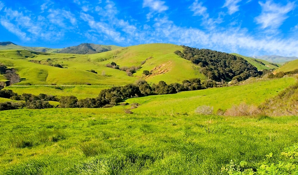 Green Meadow, Santa Ynez valley, CA by Eyal Nahmias