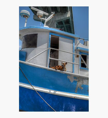 Sea dogs in The Bahamas Photographic Print