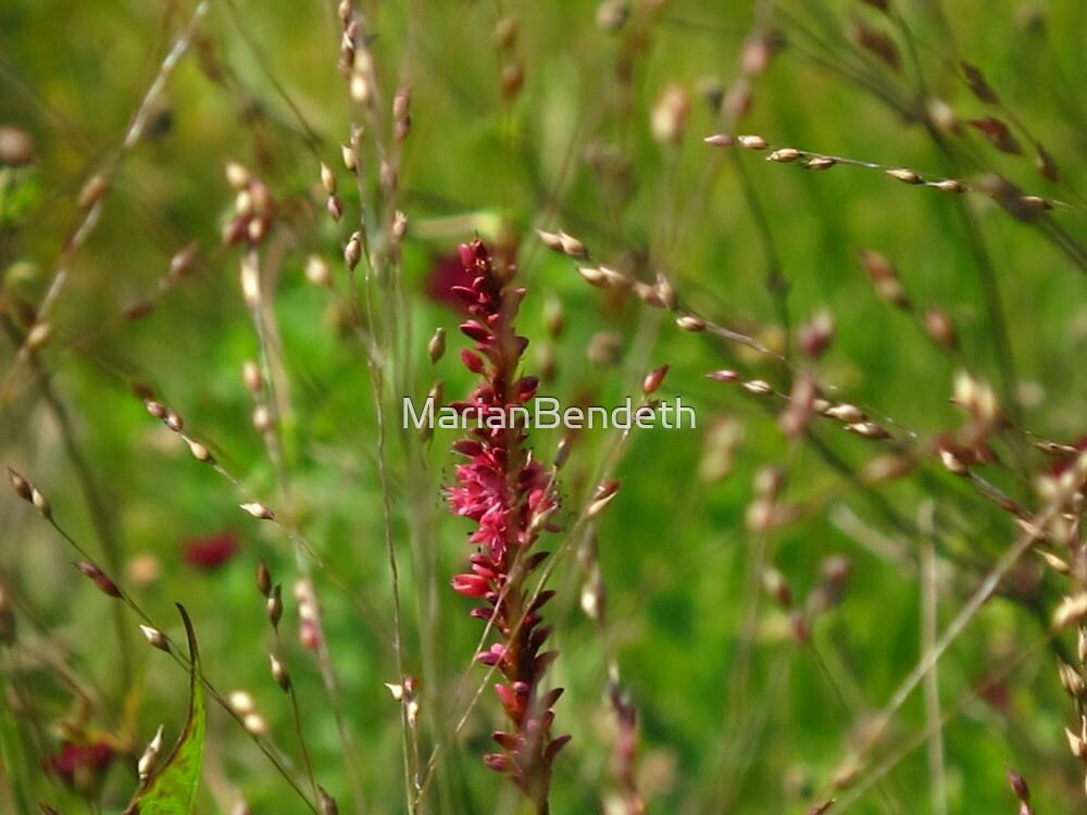 Seeds of September by MarianBendeth