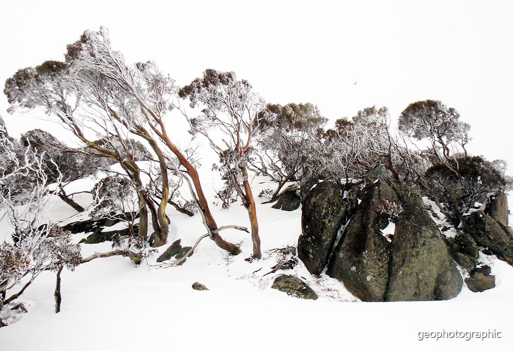 Snow Gums III by geophotographic
