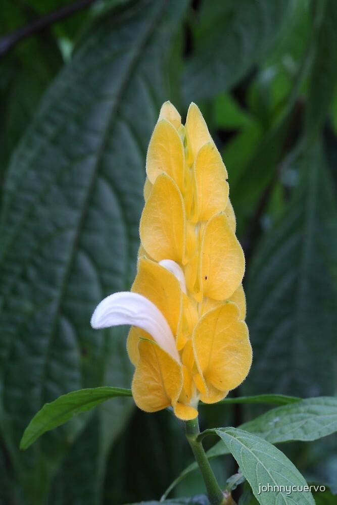 Rainforest flower by johnnycuervo