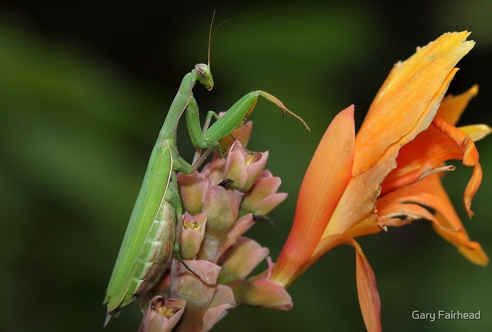 Mantis In The Garden by Gary Fairhead