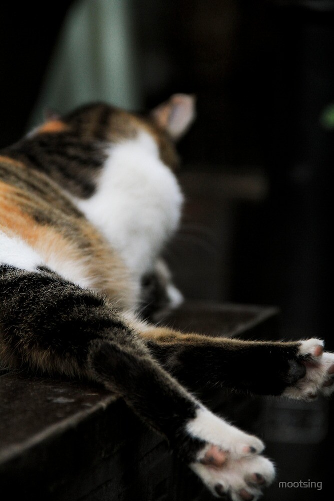 A Cat in Chengdu by mootsing