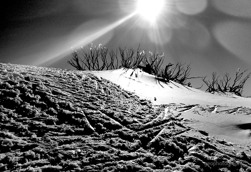 sticks in snow by geophotographic