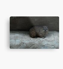 Chester Zoo Metal Print
