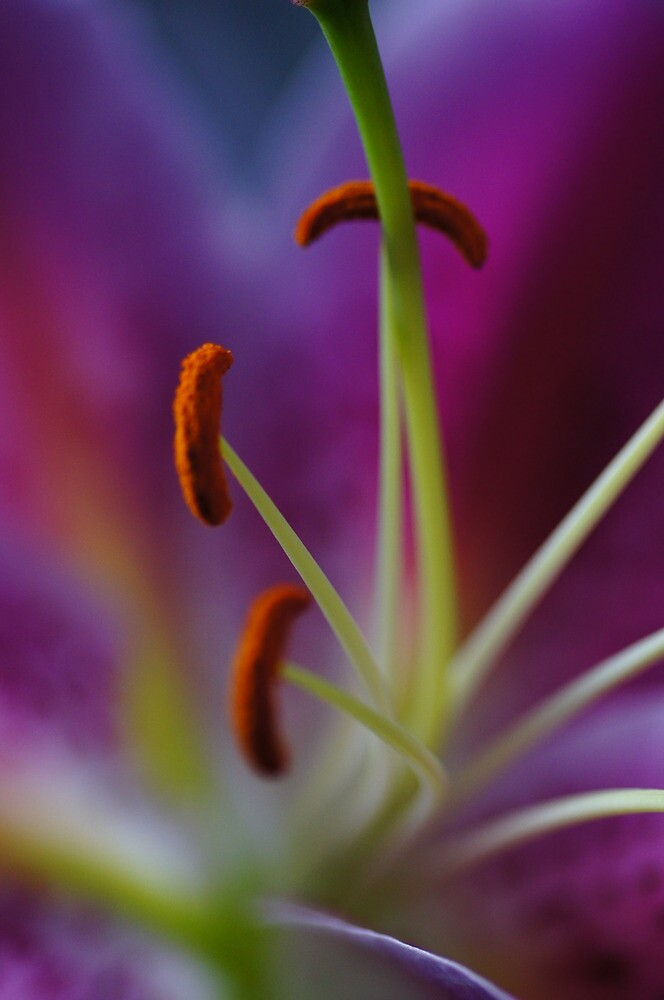 Lily Was Here by Nik Watt