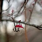 First buds of blossom in Winter by Becca7