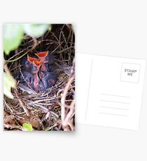 Hungry Hungry Hedge Sparrows Postcards