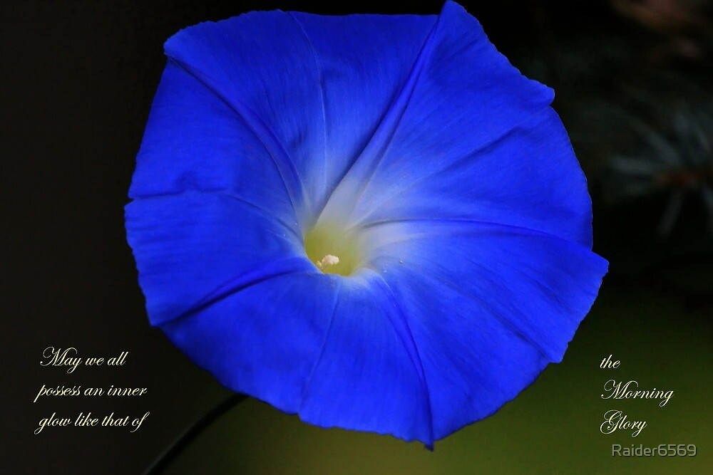 The Glow of the Morning Glory by Raider6569