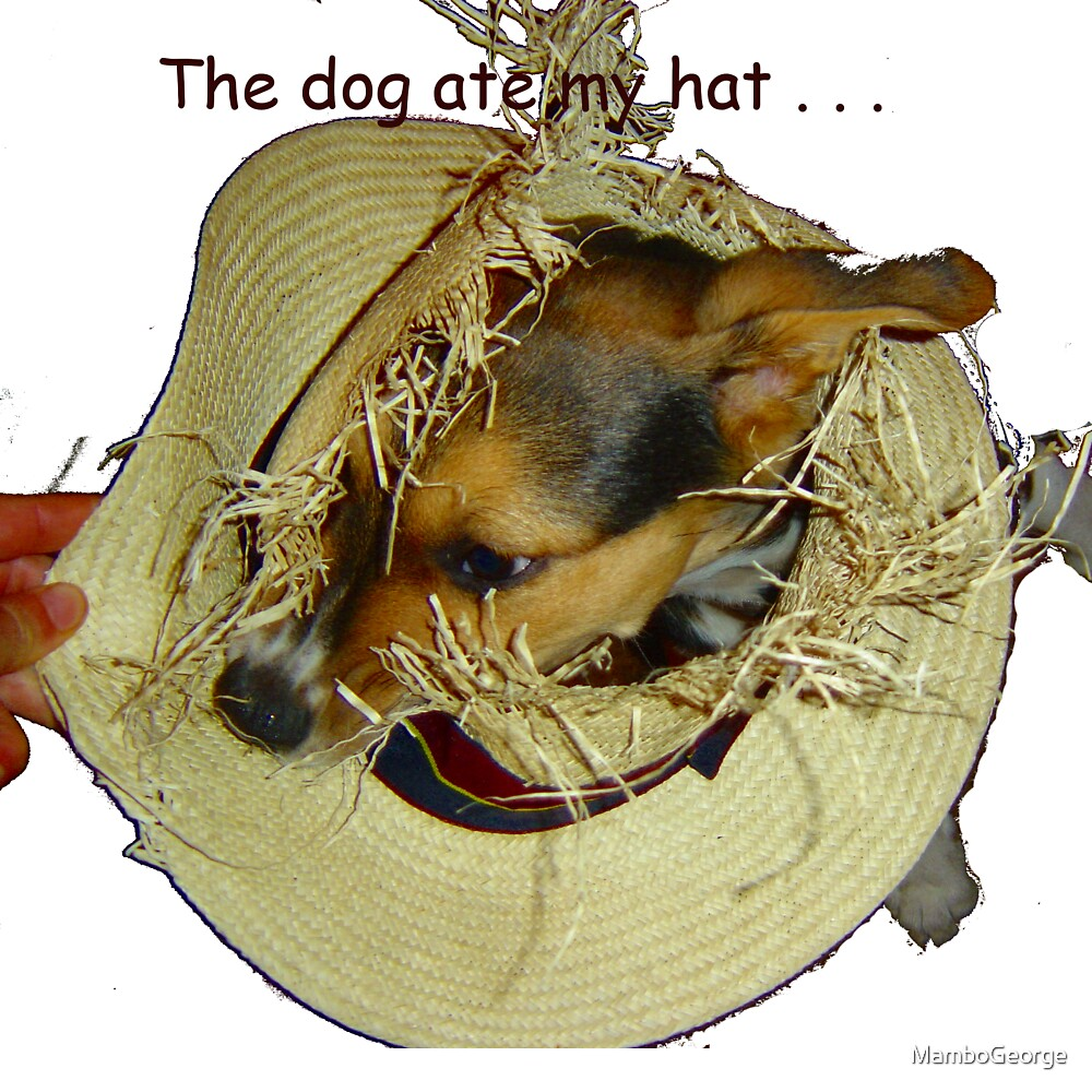 The Dog ate my Hat Print Version by MamboGeorge