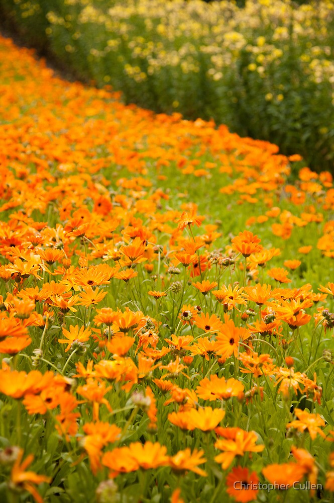 Marigold Bed by Christopher Cullen