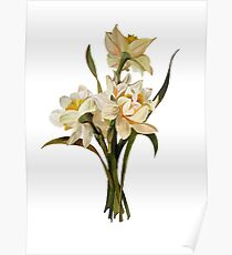 Double Narcissi In A Bouquet Isolated Poster