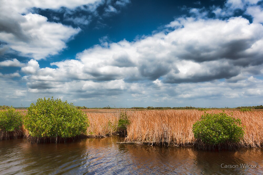 Big Cypress Preserve 4 by Carson Wilcox