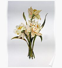 Double Narcissi In A Bouquet Poster