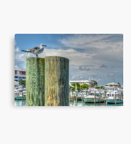 Seagull at the marina in Nassau, The Bahamas Canvas Print