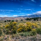 Great Sand Dune National Park - Land of Contrasts by Terence Russell