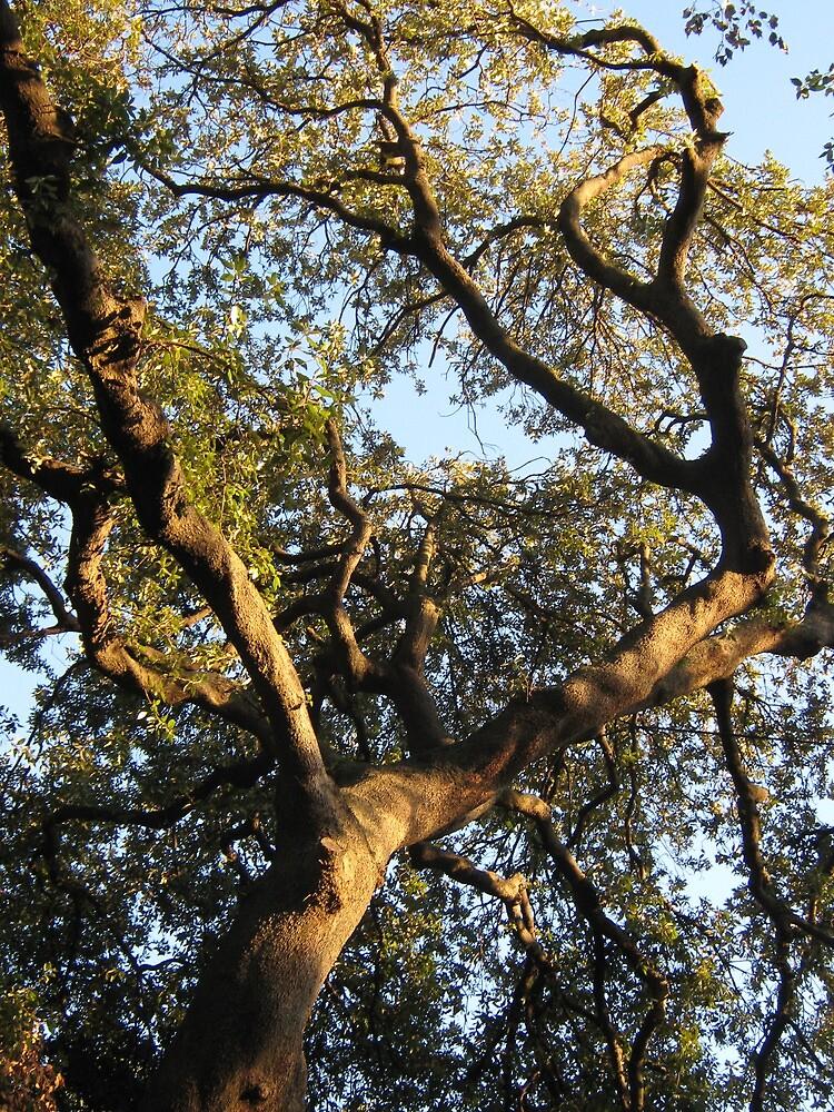 tree  by Marmellino