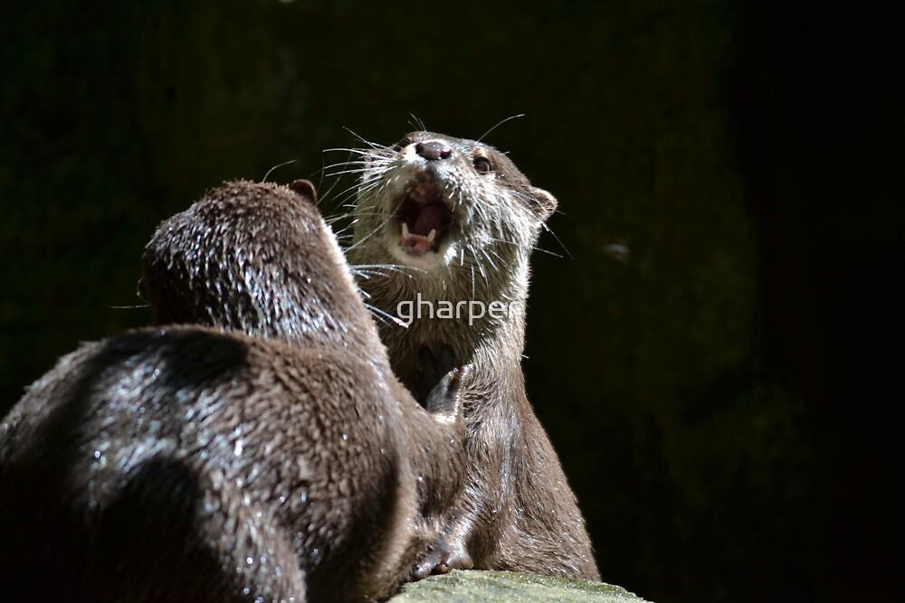 Otter 2 by gharper
