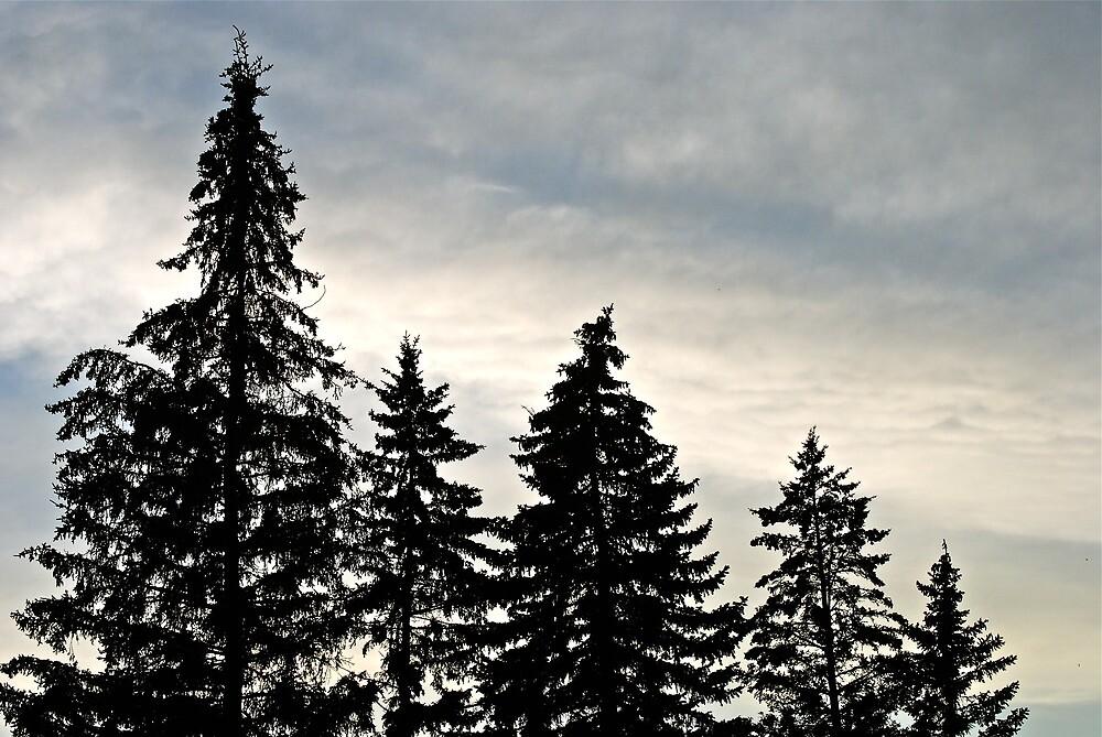 evening sky by richard  webb