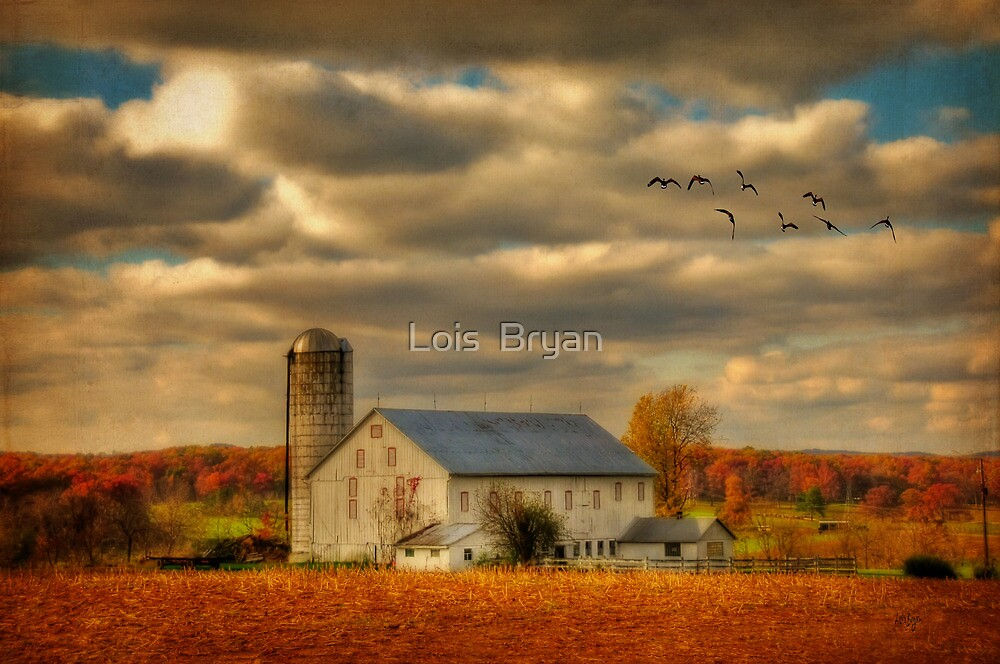 South For The Winter by Lois  Bryan