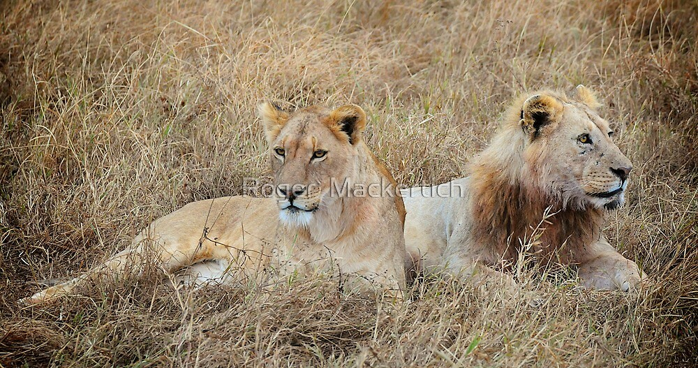 Young Lions by Roger  Mackertich