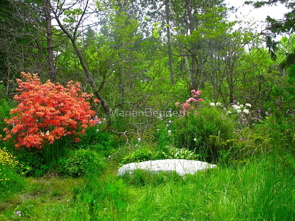 Rhododendrons in the forest by MarianBendeth