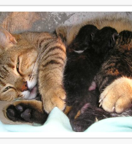 Mother Tabby Cat Suckling Four Newborn Kittens Sticker