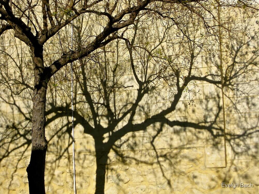 13/9 pas de deux by Evelyn Bach