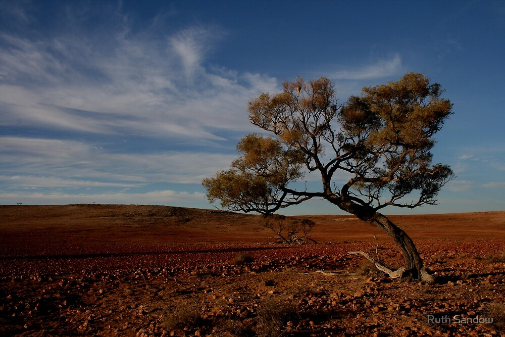 Lone tree in a stony gibber landscape. by Ruth Sandow