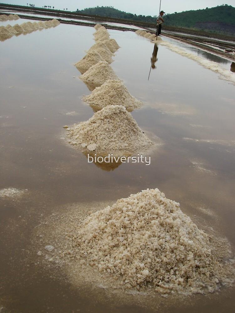 Salt often gives the taste by biodiversity