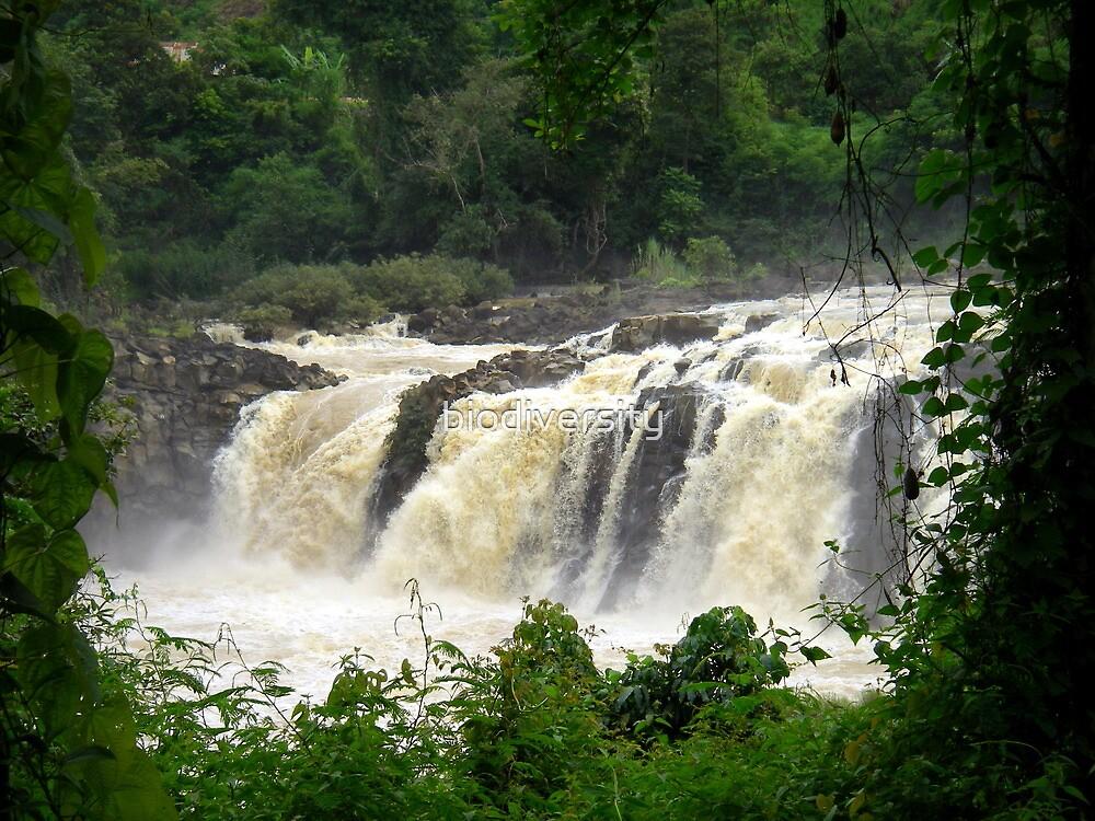 Waterfall by biodiversity