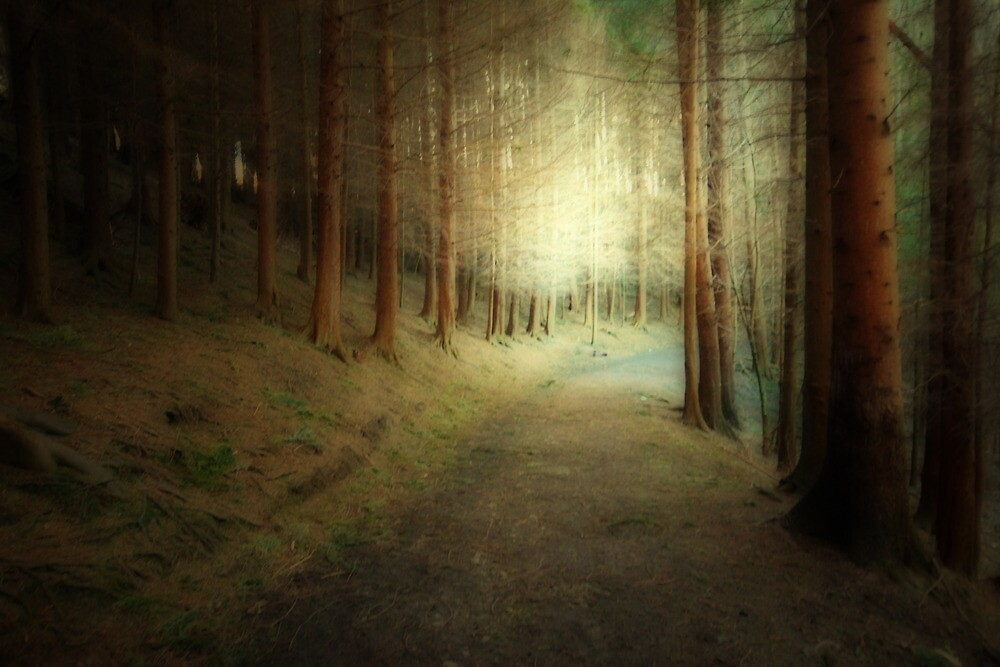 WHISPERS OF LIGHT IN THE FOREST by leonie7