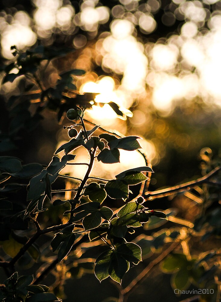 Golden Hour Bokeh by Chauvin2010