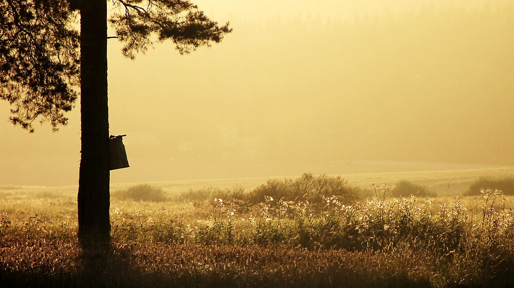 13.9.2012: Autumn Evening Sunset I by Petri Volanen