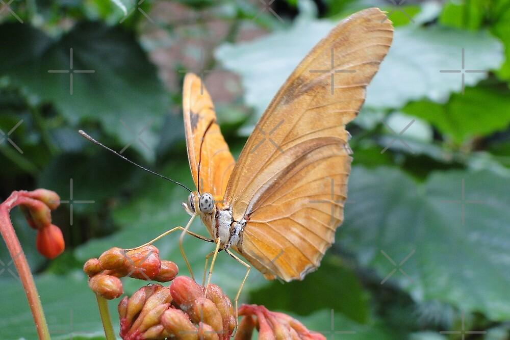 Julia Butterfly by Barrie Woodward