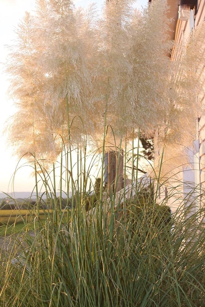 ORNAMENTAL GRASS by Pauline Evans