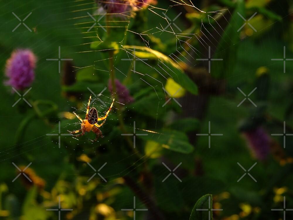 Arachne by Themis
