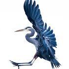 Heron Landing by toby snelgrove  IPA