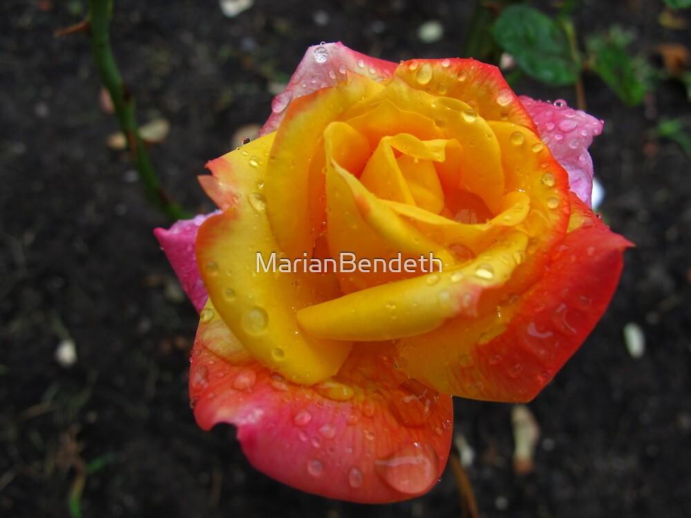 Peace in my garden by MarianBendeth