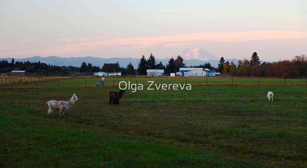 Lamas by Olga Zvereva