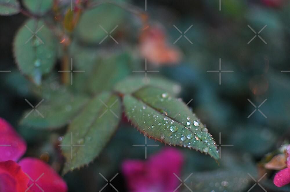 Leafy Droplets by Turlguy