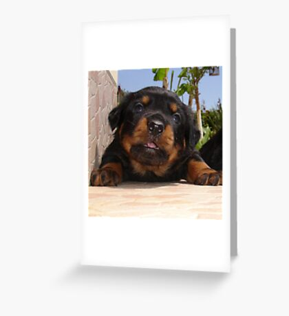 Rottweiler Puppy Giving Eye Contact Greeting Card