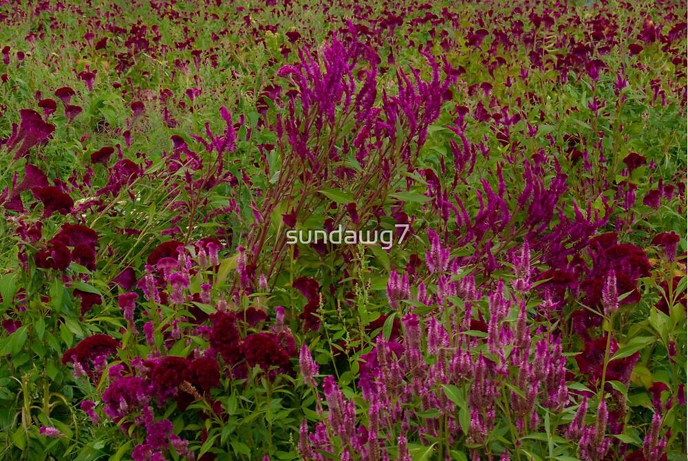 Roadside Bouquet by sundawg7