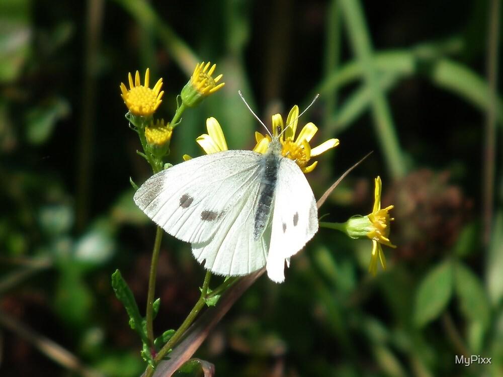 Delicate Wings by MyPixx